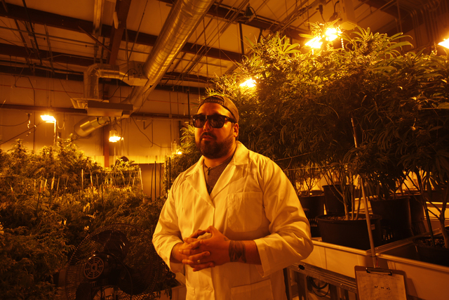 Gareth Nelson, general operations manager for Waveseer LLC, a marijuana cultivation and production company, leads a tour of the facilities at the Apex Industrial Park in North Las Vegas Monday, Ma ...