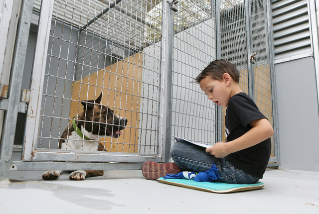 Sewell Elementary School first-grader William Bonwell reads to a pit bull terrier at The Animal Foundation March 1. Children participated in the reading exercise as part of Nevada Reading Week and ...