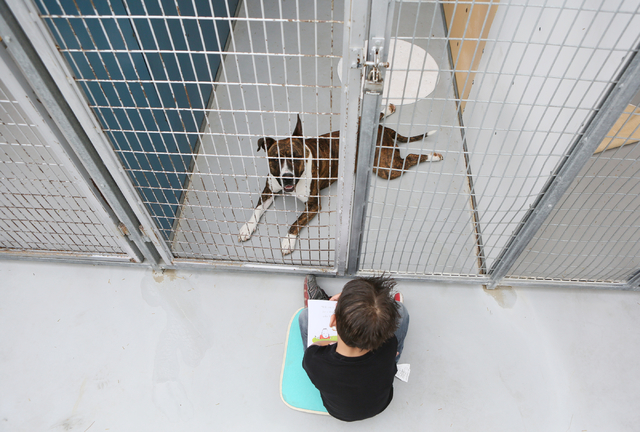Sewell first-grader William Bonwell reads to a pit bull terrier at The Animal Foundation March 1. Ronda Churchill/View