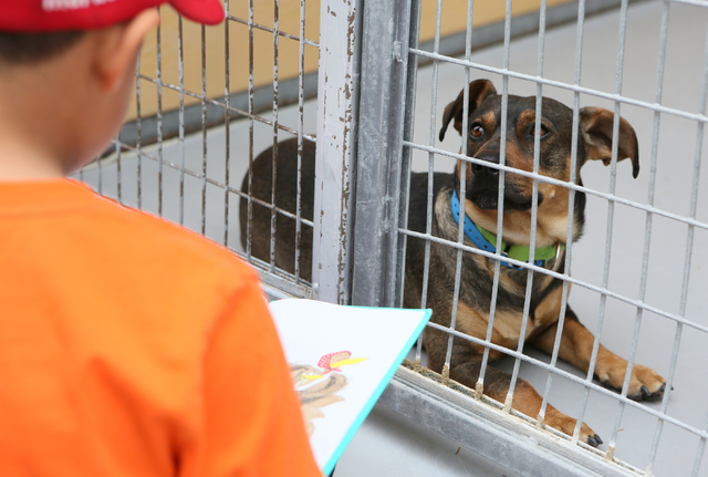 A shelter dog looks out of its pen as a first-grader reads at The Animal Foundation March 1. Ronda Churchill/View
