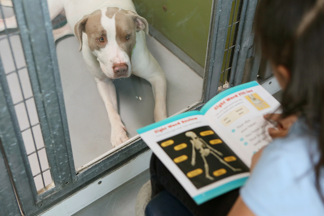 A pit bull terrier named Honey looks to Ronnow first-grader Valerie Marquez as she reads at The Animal Foundation March 1. Ronda Churchill/View