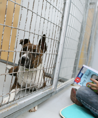 A first-grader reads to a pit bull terrier at The Animal Foundation March 1. Ronda Churchill/View