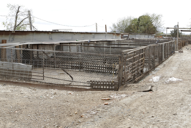 R.C. Pig Farms on 555 E El Campo Grand Ave., is shown Monday, March 7, 2016, in North Las Vegas. (Bizuayehu Tesfaye/Las Vegas Review-Journal Follow @bizutesfaye