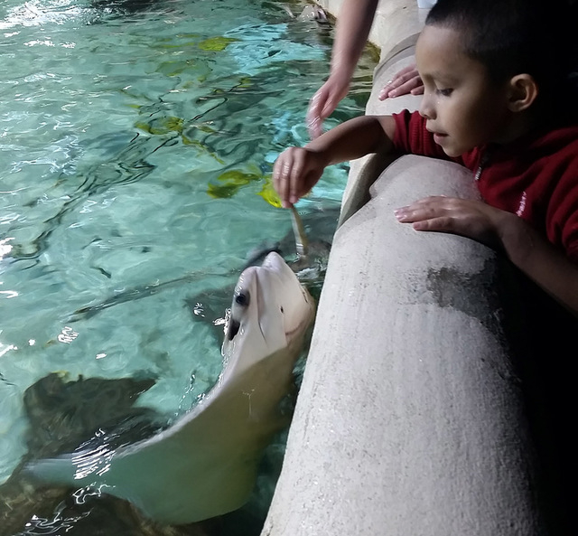 Sea Quest Aquarium plans to open open a 31,000 square-foot, interactive attraction at the Boulevard Mall. (Courtesy)