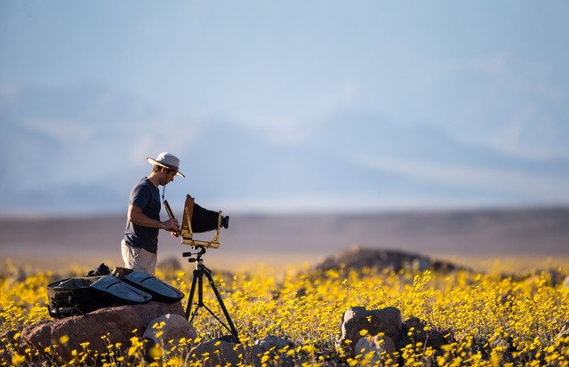 Las Vegas resident Tony Santo, right, sets up is large format camera to take photos of the wildflowers along Badwater Road in Death Valley National Park, Calif., on Saturday, Feb. 27, 2016. The Na ...
