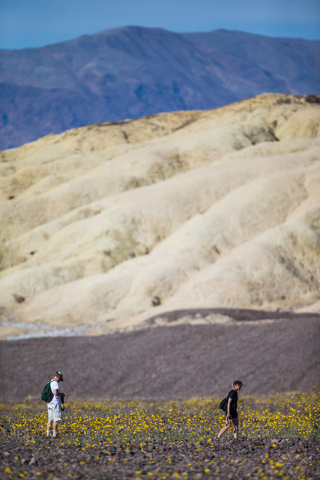 Goeff Rutledge, left, and Faye Saunders, both of San Carlos, Calif., walk among the wildflowers along California State Route 190 in Death Valley National Park, Calif. on Saturday, Feb. 27, 2016. T ...