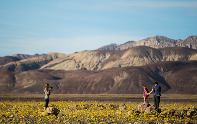 Ivett Molnar, left, waits to take a photo of Istvan Horvath, with his daughter Hanna Horvath, 5, of Berkeley Calif., among the wildflowers along Badwater Road in Death Valley National Park, Calif. ...
