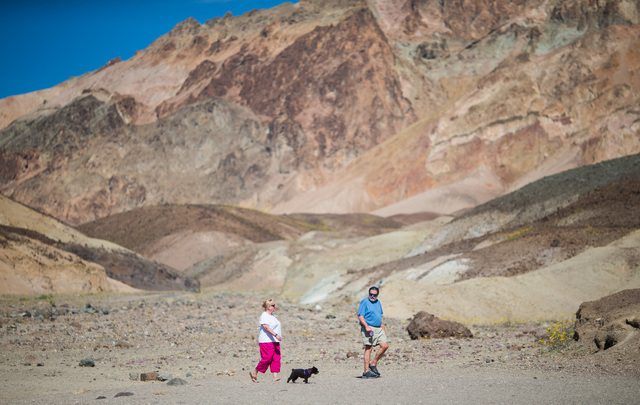 """A couple walks their dog at a stop along Artists Drive in Death Valley National Park, Calif. on Saturday, Feb. 27, 2016. The National Park Service said in a statement that the """"current bloom in De ..."""