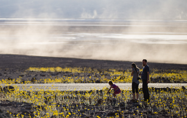Five-year-old Hanna Horvath, left, looks at the wildflowers as Istvan Horvath, right, and Ivett Molnar look on along Badwater Road in Death Valley National Park, Calif., on Saturday, Feb. 27, 2016 ...