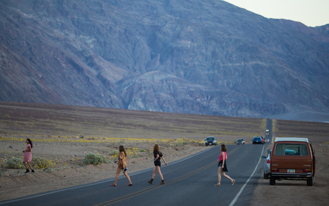 """People cross Badwater Road to see wildflowers in Death Valley National Park, Calif., on Saturday, Feb. 27, 2016. The National Park Service said in a statement that the """"current bloom in Death Vall ..."""