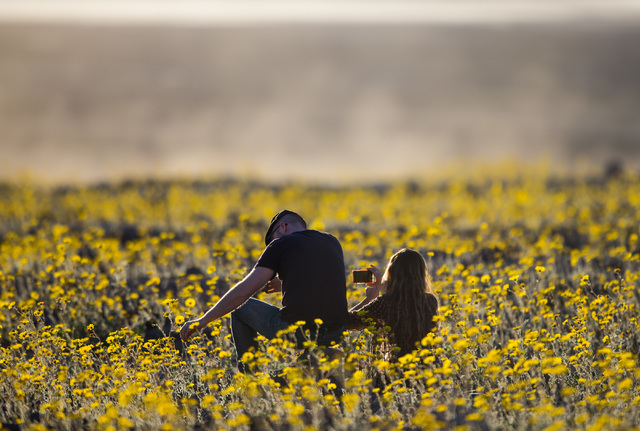 """People sit among the wildflowers along Badwater Road in Death Valley National Park, Calif., on Saturday, Feb. 27, 2016. The National Park Service said in a statement that the """"current bloom in Dea ..."""