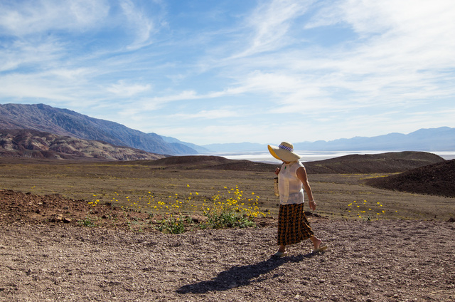 Bailing Zhang of Palos Verdes, Calif. walks past wildflowers during a stop along Artists Drive in Death Valley National Park, Calif. on Saturday, Feb. 27, 2016. The National Park Service said in a ...
