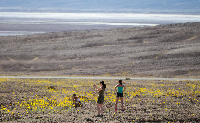 Markella Hall, from left, Melissa Pacult, and Angelique Balistreri explore wildflowers along Artists Drive at Badwater Road in Death Valley National Park, Calif., on Saturday, Feb. 27, 2016. The N ...