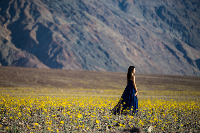 A woman waits for her photo to be taken as she walks among the wildflowers along Badwater Road in Death Valley National Park, Calif., on Saturday, Feb. 27, 2016. The National Park Service said in  ...