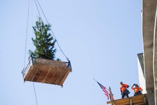 The ceremonial tree is raised during the topping off ceremony at the Lucky Dragon in Las Vegas on Friday, Sept. 11, 2015. (Chase Stevens/Las Vegas Review-Journal) Follow @csstevensphoto