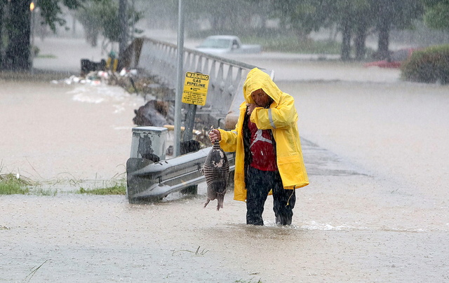 As Greens Bayou starts to crest its' banks, a man rescues a armadillo from flood waters in Houston, Texas, Monday, April 18, 2016. Storms have dumped more than a foot of rain in the Houston area,  ...