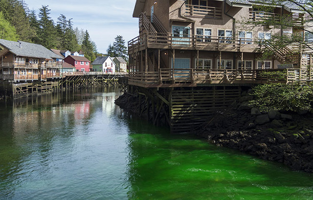 Green dye makes its way through Ketchikan Creek in Ketchikan, Alaska, on April 20. (Taylor Balkom/Ketchikan Daily News/The Associated Press)