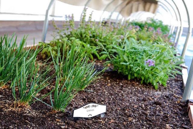 Bellagio roof-top herb garden (MGM Resorts)