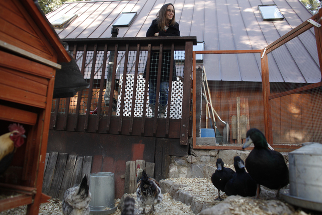 Michelle Thompson looks over her friend Allison Sosa's chicken coop at her home in Mount Charleston Thursday, March 31, 2016. Rachel Aston/Las Vegas Review Journal Follow @rookie__Rae