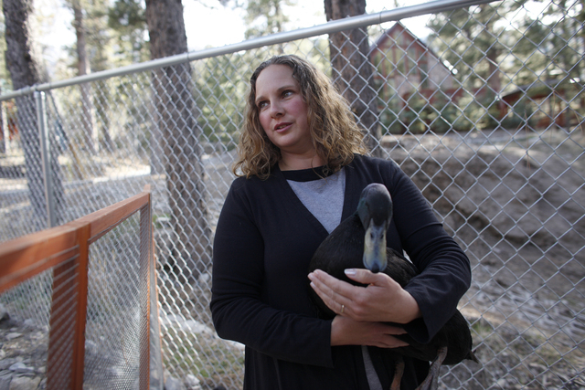 Allison Sosa holds one of her ducks in her yard at her home in Mount Charleston Thursday, March 31, 2016. Rachel Aston/Las Vegas Review Journal Follow @rookie__Rae