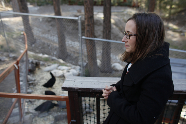 Michelle Thompson stands over her friend Allison Sosa's chicken coop at her home in Mount Charleston Thursday, March 31, 2016. Rachel Aston/Las Vegas Review Journal Follow @rookie__Rae