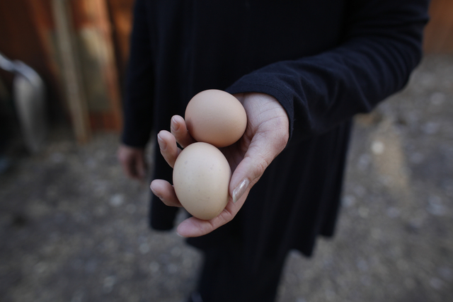 Allison Sosa holds eggs at her home in Mount Charleston Thursday, March 31, 2016. Rachel Aston/Las Vegas Review Journal Follow @rookie__Rae