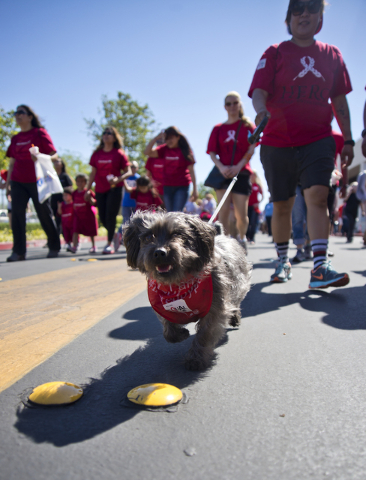 Nina Corpuz and her dog Shane walk during the 26th annual Aid for AIDS of Nevada (AFAN) AIDS Walk Las Vegas at Town Square in Las Vegas on Sunday, April 17, 2016. (Daniel Clark/Las Vegas Review-Jo ...
