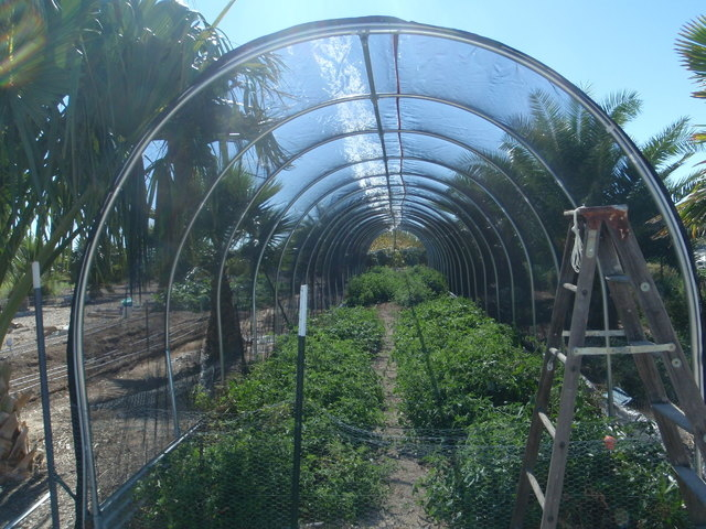 COURTESY Shade cloth is best used for leafy vegetables and herbs.