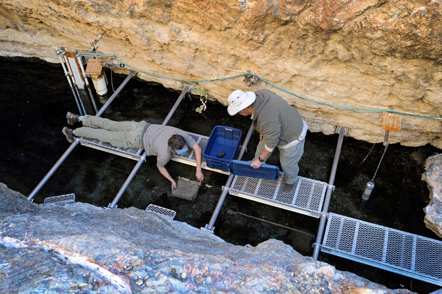 Olin Feuerbacher, left, aquaculturist at the Ash Meadows Fish Conservation Facility, and volunteer Hal Fairfield collect a spawning mat collected from the water at Devil's Hole on Nov. 25, 2013. R ...