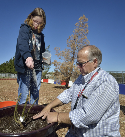 Student Katlynne Bow adds plant food to the soil of a freshly planted rosebush as special education teacher Gary Manning looks on in the community garden at Coronado High School in Henderson March ...