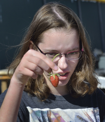 Student Katelynne Bow checks out a strawberry in the community garden at Coronado High School in Henderson March 31. Bill Hughes/View
