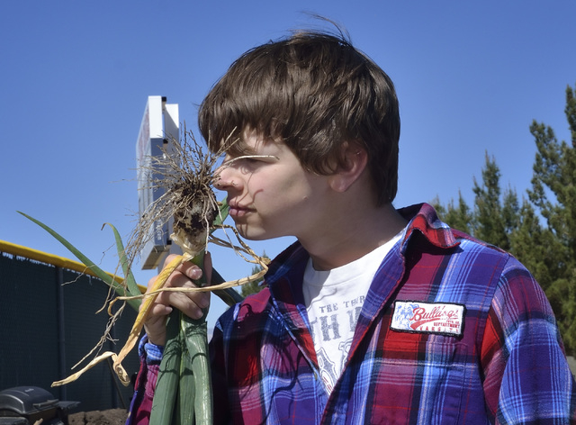Coronado High School student Keenan Davis smells a freshly picked onion in the community garden at the school in Henderson March 31. Bill Hughes/View