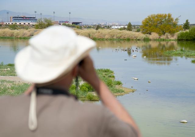 John Taylor, lead recreation assistant at the Henderson Bird Viewing Preserve, watches birds at the site April 4. Daniel Clark/View Follow @DanJClarkPhoto