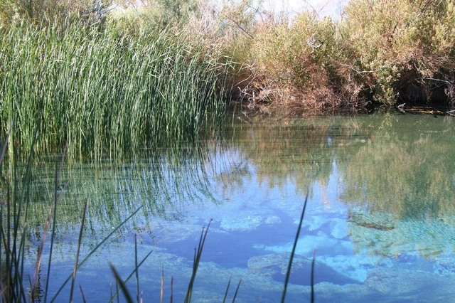 Natural springs feed several pools at Ash Meadows National Wildlife Refuge. (Las Vegas Review-Journal file)