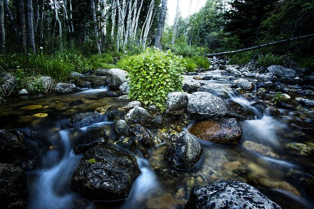 A creek bubbles through Great Basin National Park. (Jeff Scheid/Las Vegas Review-Journal)