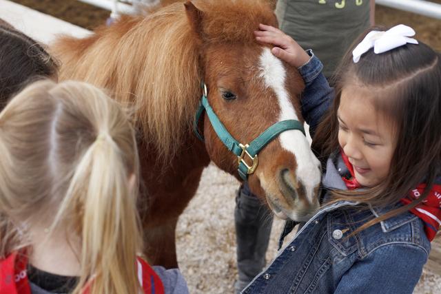 A miniature horse nuzzles Jordyn Base at the Horses 4 Heroes stables at Floyd Lamb Park at Tule Springs April 11. Rachel Aston/View Follow @rookie__rae