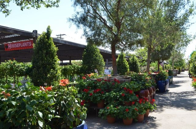 Trees and flowers are in bloom at Moon Valley's Plant World Nursery, 5311 W Charleston Blvd. Ginger Meurer/Special to View