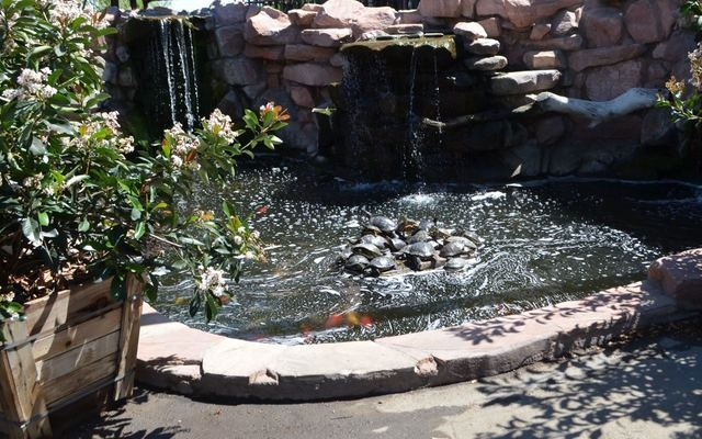 Turtles Sun Themselves In A Stack Pond At Moon Valley S Plant World Nursery