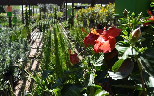Flowers are in bloom at Moon Valley's Plant World Nursery, 5311 W Charleston Blvd. Ginger Meurer/Special to View