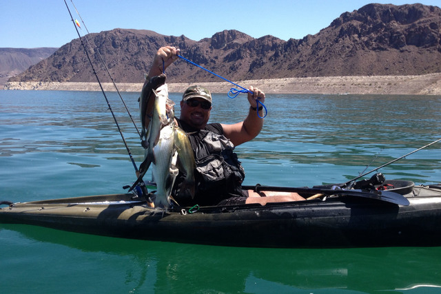 Fishing in kayak brings new dimension to sport las vegas for Lake mead fishing guides