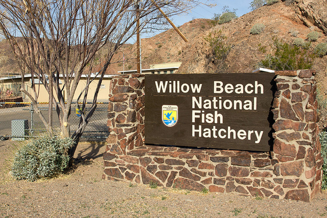 Willow Beach National Fish Hatchery Repairs Offer Hope For
