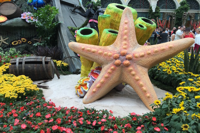 "A star fish is shown on the opening night of the Bellagio Conservatory's ""Under the Sea"" summer display on Friday, May 20, 2016. (Caitlin Lilly/Las Vegas Review Journal)"