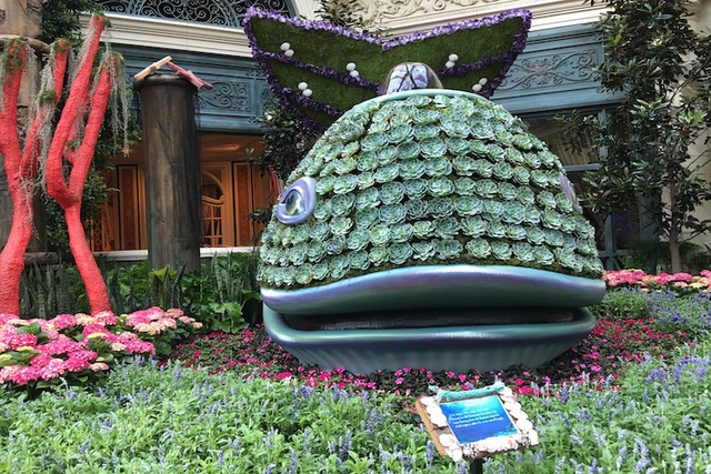 "The Bellagio Conservatory's whale display is dressed in 650 Echeveria Succulents. The display is part of the Conservatory's ""Under the Sea"" theme, which debuted on Friday, May 20, 2016. (Caitlin L ..."