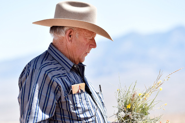 Rancher Cliven Bundy carries a bouquet of desert foliage that his cattle grazes on during an event near his ranch in Bunkerville on Saturday, April 11, 2015. (David Becker/Las Vegas Review-Journal)