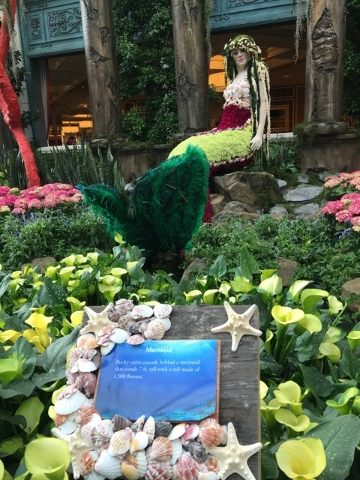 The Bellagio Conservatory's exquisite mermaid display stands 7 ft. tall with a tail made of about 1,500 flowers.The Bellagio Conservatory debuted the mermaid as part of its summer display on Frida ...