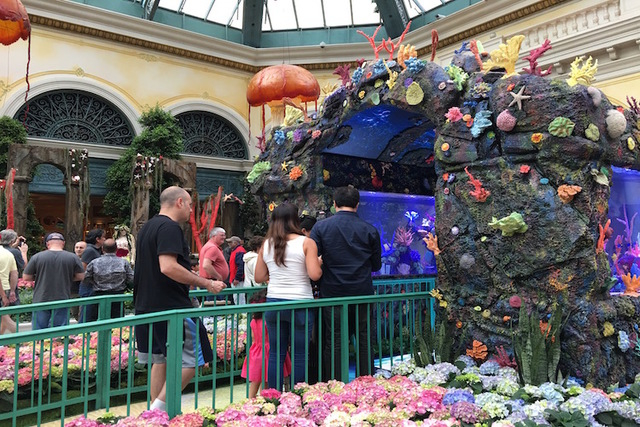 "Guests line up to walk through the two 20 ft. aquariums designed by the stars of Animal Planet's hit show ""Tanked"" at the opening of the Bellagio Conservatory's ""Under the Sea"" display on Friday,  ..."