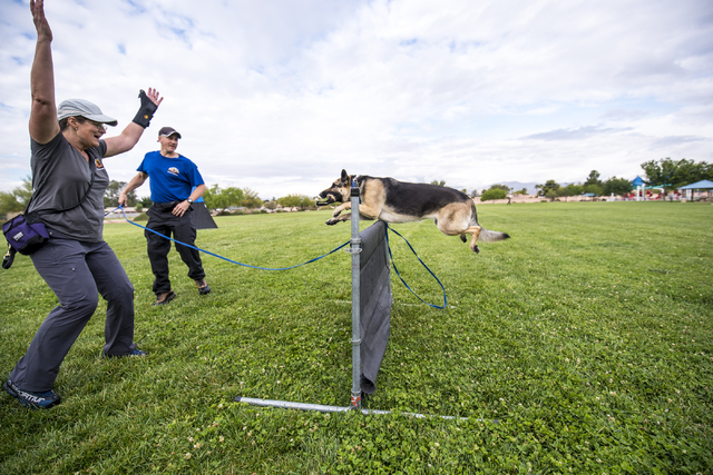 Liz Baechler, left, and Jeff Wagner cheer on Liz's dog Schatzi as he jumps over an obstacle during a Las Vegas Valley Schutzhund Club training session at Patriot Park May 7, 2016. Joshua Dahl/View