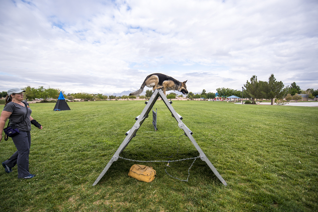 Liz Baechler watches as her dog Schatzi goes over an obstacle during a Las Vegas Valley Schutzhund Club training session at Patriot Park in Las Vegas May 7, 2016. Joshua Dahl/View