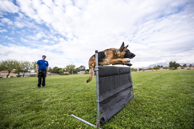 Jeff Wagner trains his dog Koda during a Las Vegas Valley Schutzhund Club training session at Patriot Park in Las Vegas May 7, 2016. Schutzhund is a sport that focuses on developing and evaluating ...