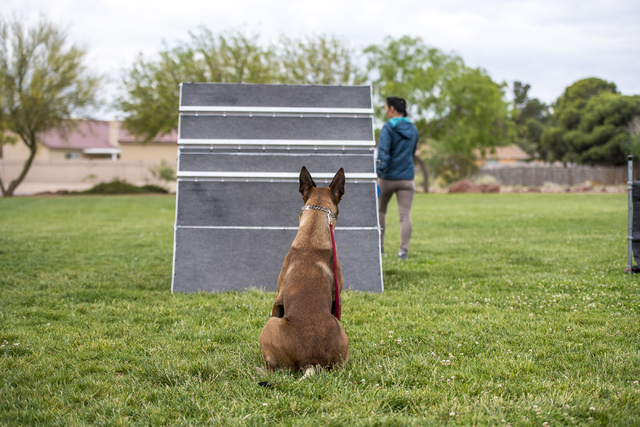 Patricia Hanisee works with her dog Odin during a Las Vegas Valley Schutzhund Club training session at Patriot Park in Las Vegas May 7, 2016. Joshua Dahl/View